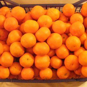 """Mandarin """"clementina"""""""