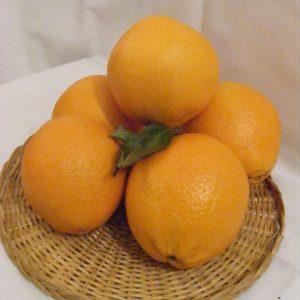 "Narancs ""spanyol"""