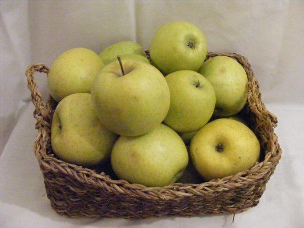 Mucsu alma